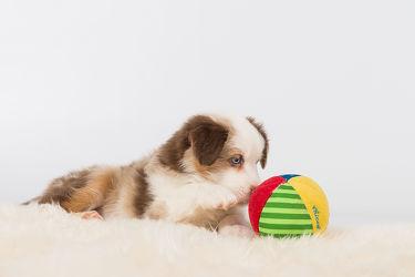 Bild mit Tiere, Haustiere, Hunde, Tier, Hund, Welpe, Tierwelt, Hundebabys, Haustier, Welpen