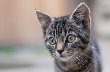 Bilder mit Katzen