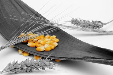 Bild mit Ernte, Küchenbilder, KITCHEN, Küche, Mais, Maiskolben, Erntedank