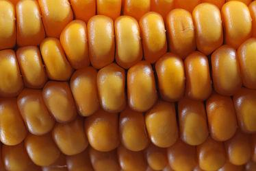 Bild mit Gemüse, Küchenbilder, KITCHEN, Küche, Küchen, Mais, Maiskolben, Körner