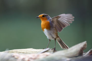 Bilder mit Vögel
