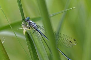 Bild mit Insekten