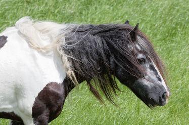 Bild mit Tiere, Pferde, Tier, Kinderbild, Kinderbilder, Pferd, reiten, Pferdeliebe, pferdebilder, pferdebild