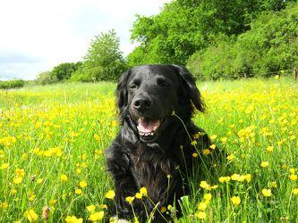 Bild mit Tiere, Haustiere, Hunde, Tier, Hund, Dog, Hundebild, Fotografien Tiere