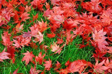 Bild mit Gräser, Herbst, Blätter, Gras, Wiese, Blatt, Wiesen, Laub