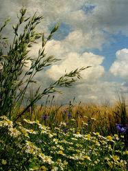 Gräser und Feldblumen