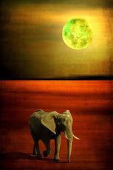 Bild mit Kunst, Tiere, Tier, Abstrakt, tierisch, yammay tierisch, Animal, Tierwelt, Schatten, Silhouette, natur kunst