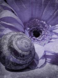 Bild mit Kunst, Blumen, Blume, Flower, Abstrakt, Blüten, yammay blumig, Schatten, Silhouette, natur kunst