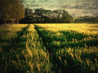 Bild mit Kunst, Landschaften, Landschaft, Abstrakt, yammay ländlich, Land, Schatten, Silhouette, natur kunst, ländlich