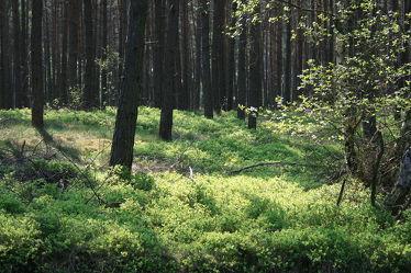 Bild mit Natur, Bäume, Wälder, Laubbäume, Wald, Baum, Waldlichtung, Märchenwald, Waldblick, Blick in den Wald, Waldbild, Waldbilder, Wald Bild, Baumstämme, Baumgewächs, Blick in den Wald mit Gegenlicht, Elfen, Elfe, Landschaften & Natur, Natur/Landschaften, Fotografien Landschaften/Wälder, Landschaftsfotografie, Fotografien, Moose, Moos