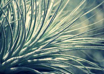 Bild mit Natur, Pflanzen, Gräser, Makro, Gras, Wiese, Wiesengras, Wiesen, Weide, Weiden, Grashalme