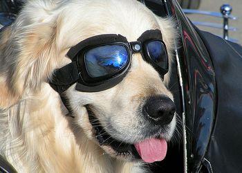 Bild mit Tiere, Haustiere, Hunde, Tier, Hund, Dog, Hundebild, lustig