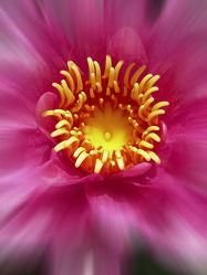 Gelbe Blütenkrone