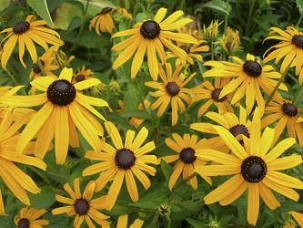 Bilder mit Gartenblumen