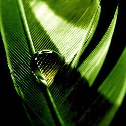 Bild mit Grün, Federn, Wassertropfen, Regentropfen, Wasserperlen, Gefieder, Feder, Vogelfeder, Vogelfedern, Wasserperle