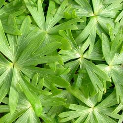 grüner Blätterteppich