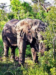 Bild mit South Africa - Wildlife