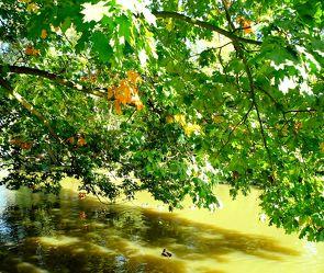 Bild mit Landschaft und Natur
