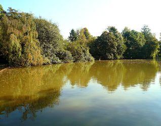 Bild mit Natur, Landschaften, Bäume, Wälder, Flüsse, Sonne, Wald, Baum, Landschaft, Landschaft und Natur, Fluss