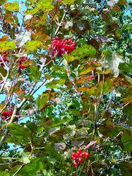 Herbstimpression 8