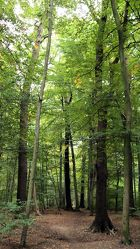 Waldweg im Oktober