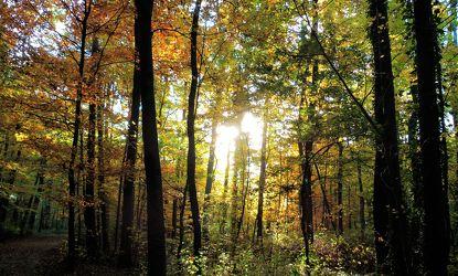 Bild mit Bäume, Herbst, Sonne, Wald, Landschaft und Natur, Herbstsonne, Herbstlicht, Oktober, Herbststimmung, Goldener Oktober