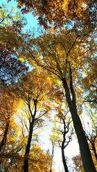 Bild mit Natur, Landschaften, Bäume, Jahreszeiten, Wälder, Herbst, Wald, Baum, Landschaft, Entspannung, Erholung
