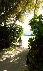 Bild mit Sonnenuntergang, Urlaub, Palmen, Strand, Meer, Palme, Paradies, Ruhe, Malediven, ozean