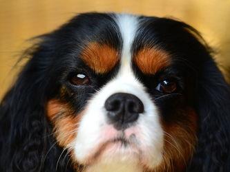 Bild mit Säugetiere, Haustiere, Haustiere, Hunde, Hund, Haustier