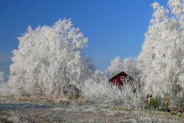 Bild mit Pflanzen, Himmel, Bäume, Winter, Weiß, Sträucher, Blau, Winterzeit, Idylle, Rauhreif, Raureif, Waldhaus