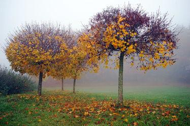 Bild mit Bäume,Herbst,Nebel,Blätter,November,Herbststimmung,Dunst,Kugelbäume