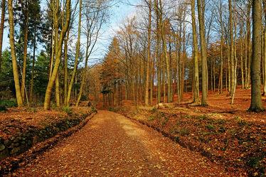 Bild mit Bäume, Herbst, Herbst, Sonne, Licht, Bunt, farbig, Wandern, Wanderwege, Schleswig_Holstein, Laub, Naturpark, Herbstidylle, Hüttener_Berge