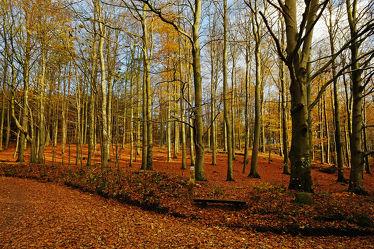 Bild mit Bäume, Herbst, Herbst, Sonne, Licht, Bank, Bunt, farbig, Wandern, Wanderwege, Schleswig_Holstein, Laub, Ruheplatz, Naturpark, Erholen, Herbstidylle, Hüttener_Berge, Ausruhen