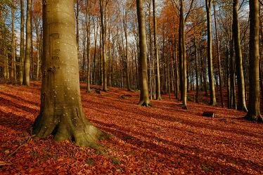 Bild mit Natur, Bäume, Wälder, Herbst, Wald, Baum, Erholung, Wandern