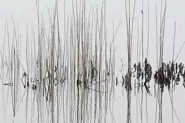 Bild mit Gewässer, Seen, Herbst, Nebel, Nebel, Schilf, Meer, Extras, reet, Binnenmeer