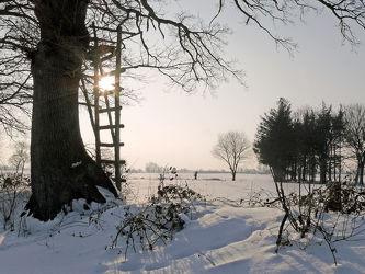 Bild mit Pflanzen, Gräser, Himmel, Bäume, Winter, Schnee, Weiß, Wege, Nebel, Sonne, Hochsitz, Felder, Winterzeit, Wiesen, Ausspannen, Ausspannen, Geniessen, Geniessen, Idylle, Wanderwege, Dunst, Schneespuren, Ausschau