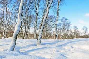 Bild mit Pflanzen, Gräser, Himmel, Schnee, Weiß, Birken, Blau, Felder, Schönheit, Winterzeit, Wiesen, Moor, Hochmoor, Unterholz, Lebensgefahr, Tiefmoor, Vorsicht, Tücken, Sumpfmoor, Schneefelder, Grasbüschel, Schneefläche, Tauwetter, Regenschauer