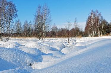 Bild mit Pflanzen, Gräser, Himmel, Schnee, Weiß, Birken, Blau, Felder, Schönheit, Winterzeit, Wiesen, Moor, Hochmoor, Unterholz, Lebensgefahr, Tiefmoor, Vorsicht, Tücken, Sumpfmoor, Schneefelder, Grasbüschel, Schneefläche