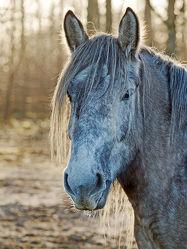 Bild mit Säugetiere, Pferde, Kinderbild, Kinderbilder, Kinderzimmer, Pferd, Gefühle, Freundschaft, reiten, Leben, Freude, Leid, Freund, Kummer, Fühlen, Mitgefühl, Pferdeliebe, pferdebilder, pferdebild