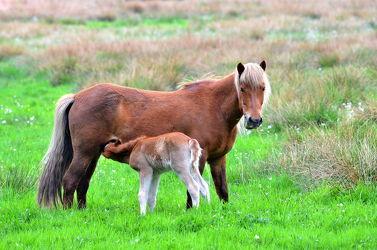 Bild mit Tiere, Säugetiere, Sport, Trinken, Pferde, Pferde, Tier, Kinderbild, Kinderbilder, Kinderzimmer, Pferd, Pferd, Kind, Freundschaft, Weide, reiten, reiten, landwirtschaft, Fohlen, Mutter, Tierliebe, Haustier, Pferdeliebe, pferdebilder, pferdebild