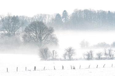 Bild mit Bäume, Winter, Schnee, Sträucher, Nebel, Landschaft, Felder, Winterzeit, Kälte, Frost, Wiesen, Kälteeinbruch, Wärmeeinbruch