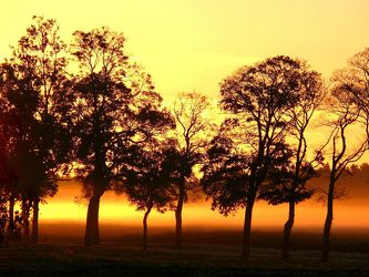 Bild mit Himmel, Frühling, Nebel, Baum, Landschaft, Sonnenschein, Usedom, Tapete, rote, Deko, Morgenstimmung, Dunst
