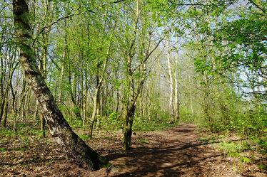 Bild mit Grün, Landschaften, Bäume, Wälder, Frühling, Birken, Wald, Wanderweg, Erholung, Unterholz, Wandern, Ausspannen, Randweg