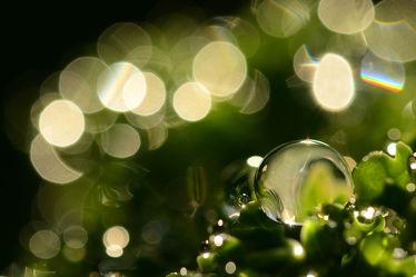 Bild mit Makroaufnahme, Makro, Wassertropfen, Wasserperlen, Weihnachten, Tapete, Makros, Bilder, Tautropfen, Wellnes, Perlen, Perlen, Adventszeit, Leinwand, Dekoration, Tauperlen