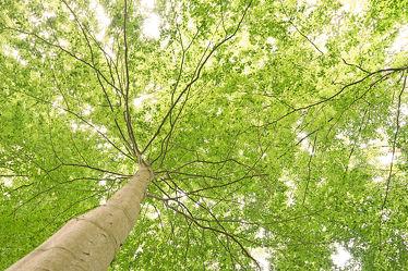 Bild mit Grün, Landschaften, Wälder, Frühling, Wald, Blätter, Laubwälder, frühjahr, Erholung, Ausspannen, Geniessen, Laub, Blätterdach