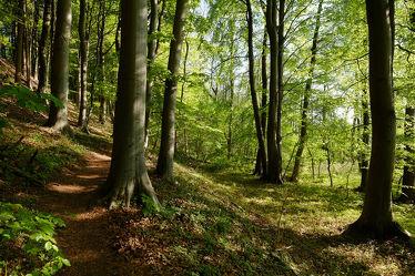 Bild mit Grün, Landschaften, Wälder, Frühling, Sonne, Wald, Laubwald, Wanderweg, frühjahr, Abendsonne, Laub, Frühlingswald, Frisches_Grün