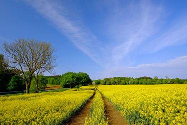 Bild mit Landschaften, Landschaften, Himmel, Bäume, Wolken, Wälder, Raps, Felder, Naturpark_Westensee, Frühlingslandschaft