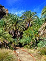 Bild mit Bäume, Wolken, Wälder, Palmen, Sommer, Wald, Baum, Palme, Regenwald, Dschungel