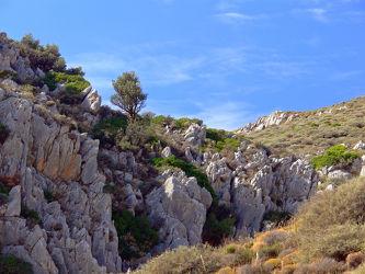 Bild mit Pflanzen,Landschaften,Berge,Felsen,Urlaub,Mittelmeer,Reisen,Stille,Europa,Wandern,Ausspannen,Geniessen,Gestein,Kreta,Abendidylle,Ãgäis,Baumgrenze,Gestrüpp
