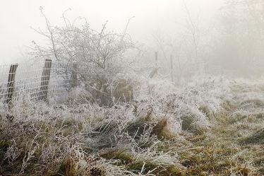Bild mit Himmel,Winter,Sonnenaufgang,Nebel,Winterzeit,Kälte,Wandern,Rauhreif,Raureif,Gitter,Zäune,Nebelwand